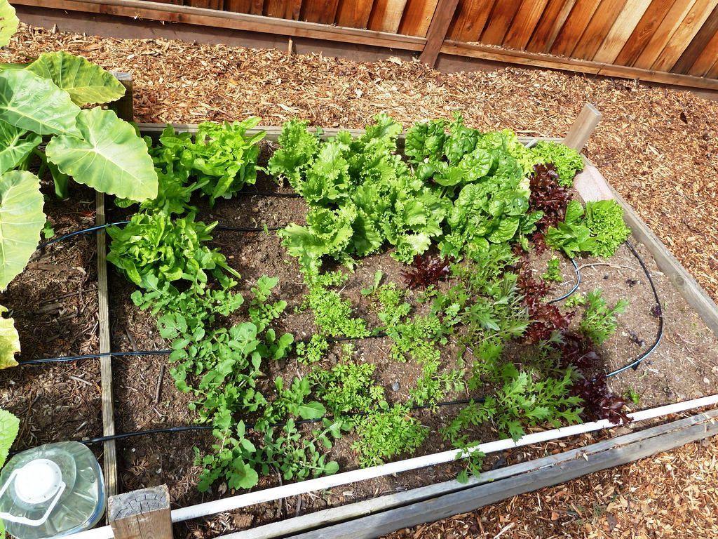 Здесь удобно выращивать зелень(редис, укроп, петрушку, салат).