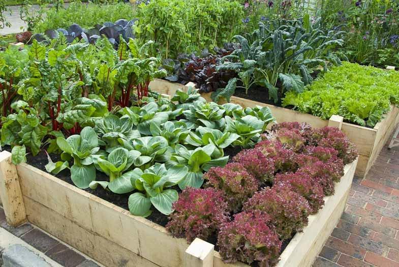 Теплая грядка - всегда хороший урожай разнообразных фруктов, овощей и ягод