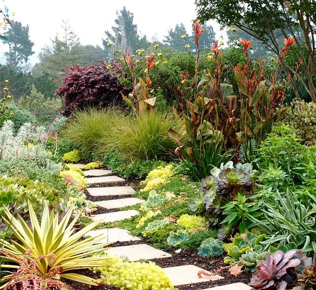 Красочные цветы южного сада