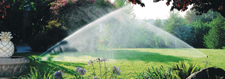 В дождевании нуждаются все хвойные растения, особенно в весенне-летний период.