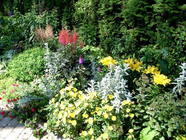 Миксбордер: желтые лилии в компании с высокими соцветиями лизимахий, кустиками лапчаток и бересклета