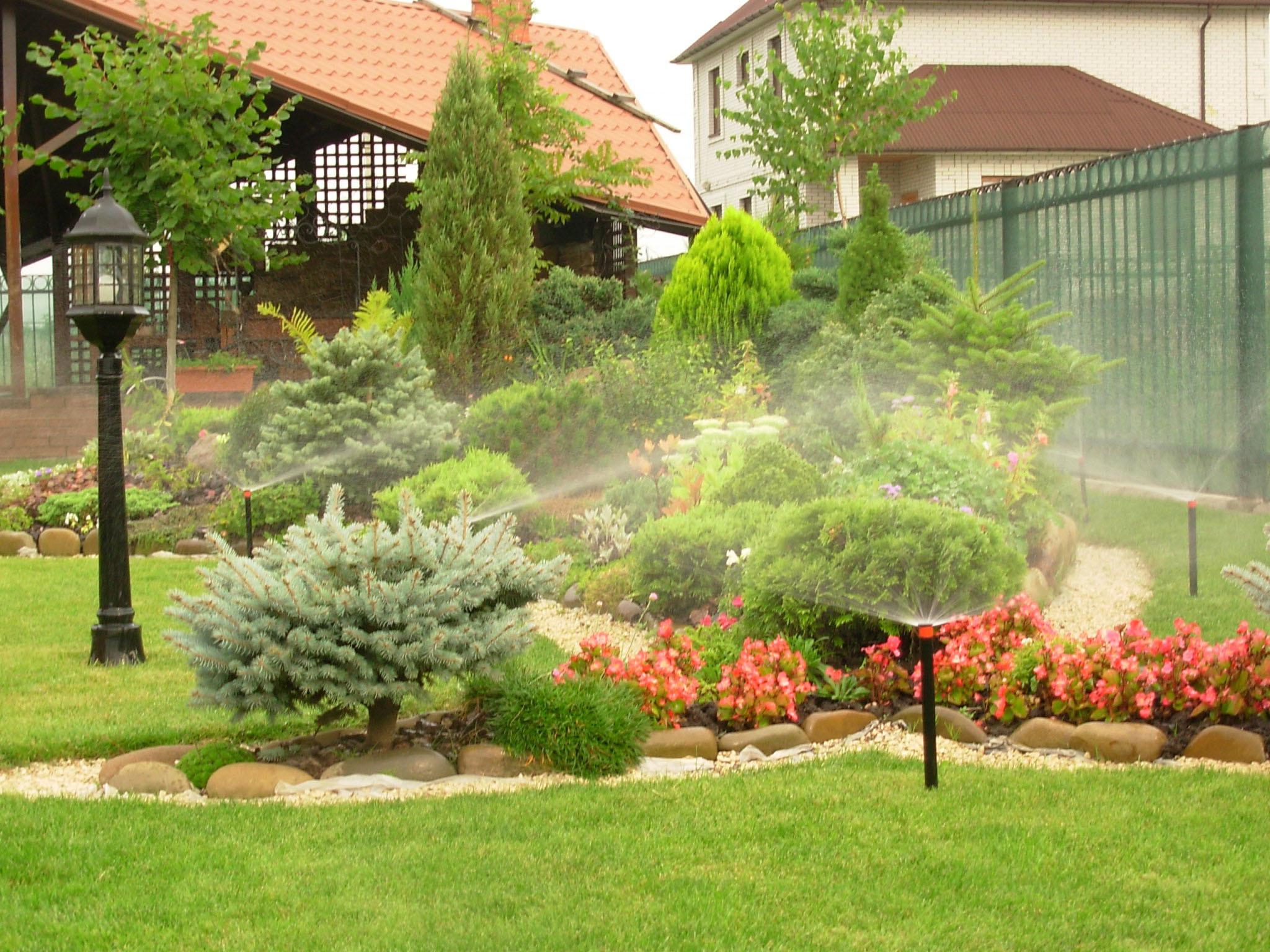 Вечнозеленые растения в саду