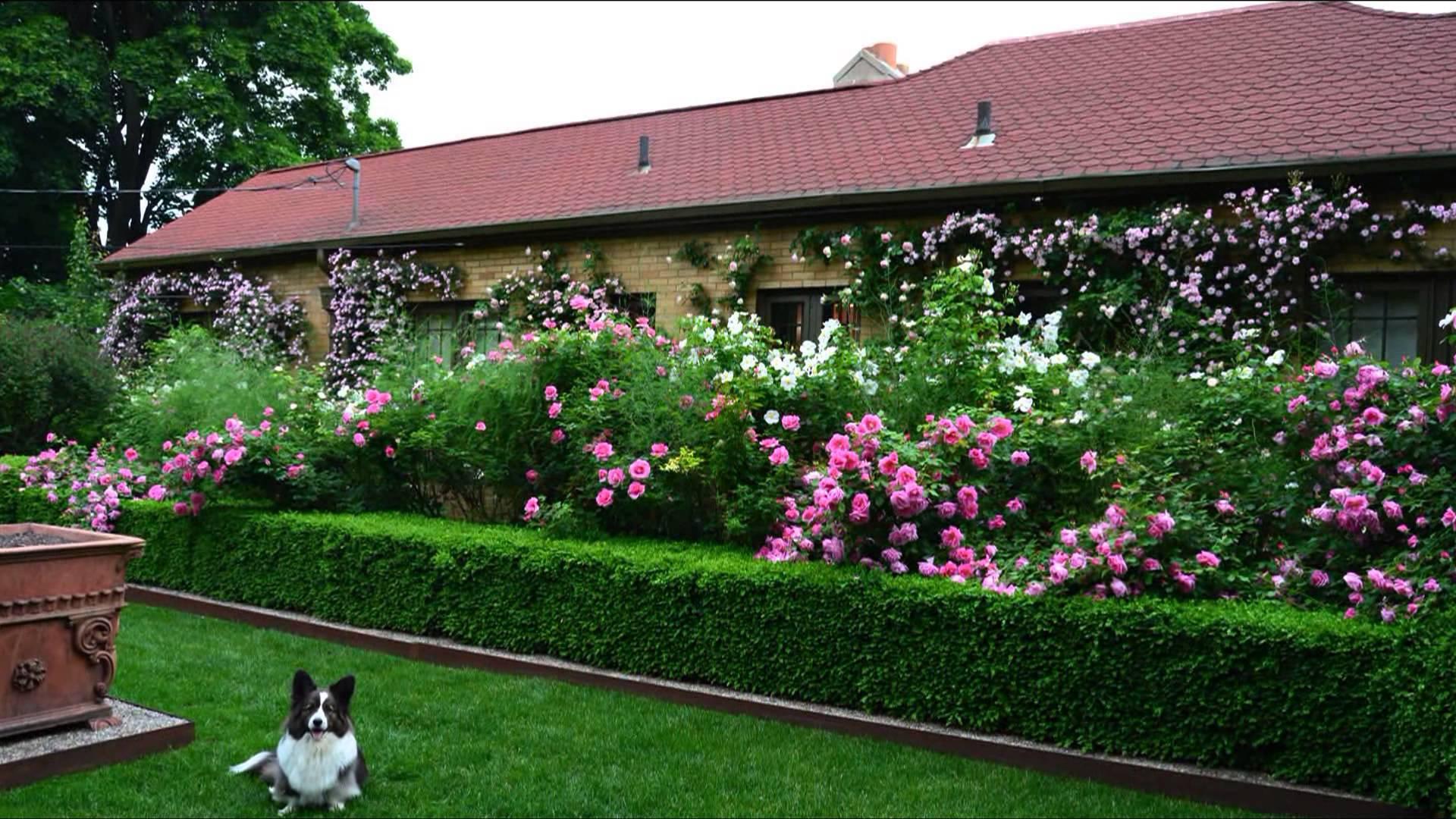 Используется для ограничивания цветников и отдельных садовых зон, высаживается вдоль дорожек.