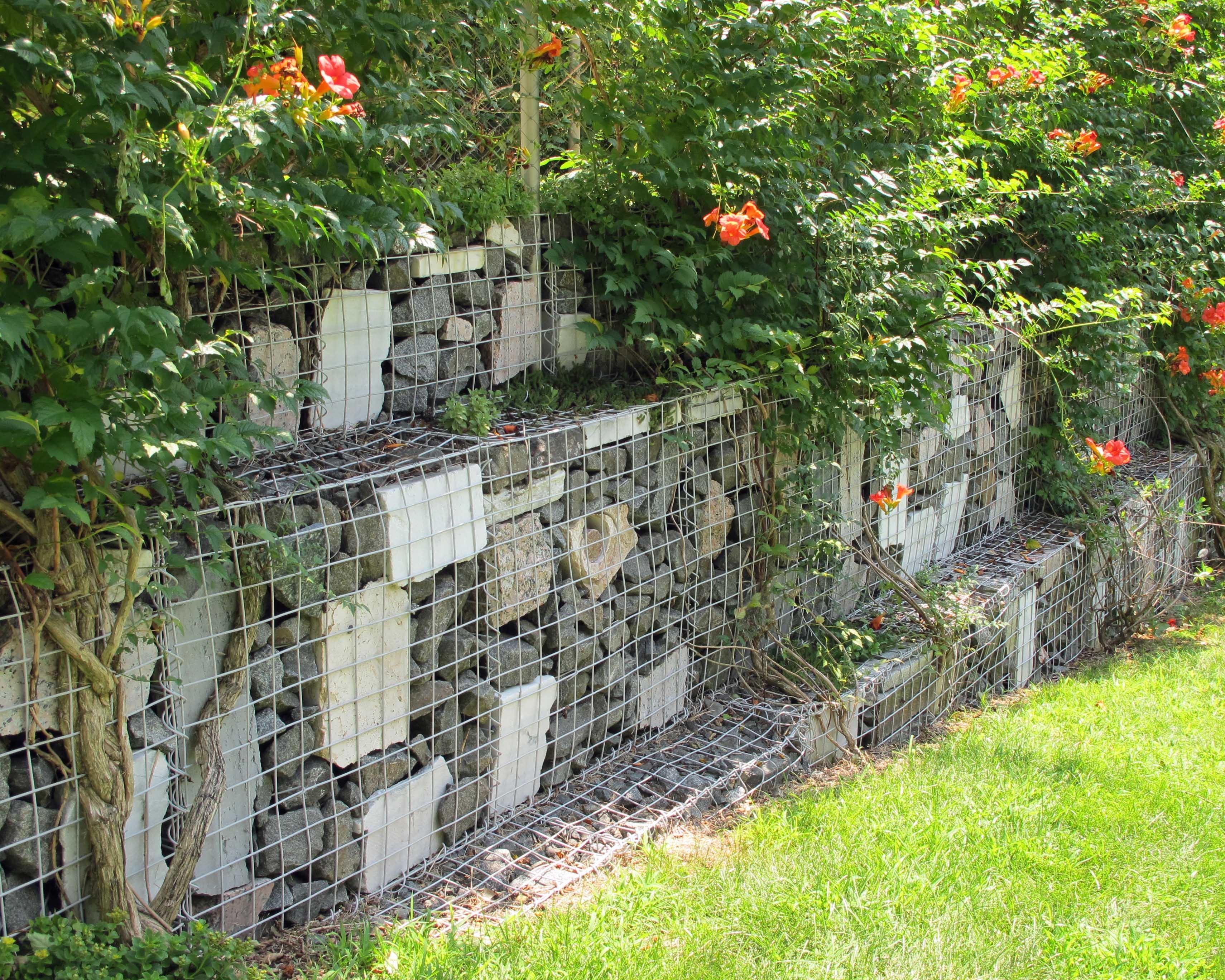 Габионы можно декорировать стелющимися или плетистыми растениями