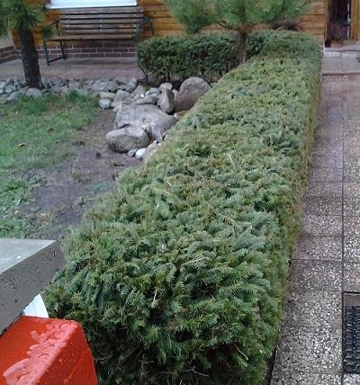 Бордюры выращивают из низкорослых и медленно растущих растений.