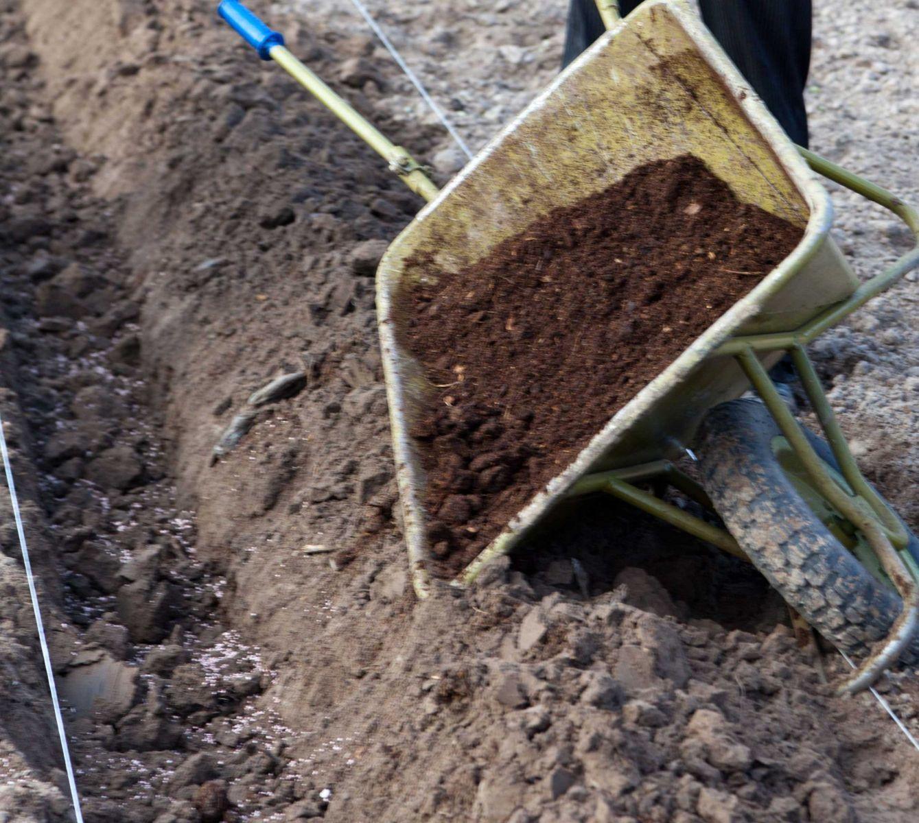 Перед посадкой у саженцев удаляют поврежденные и сломанные корни. Корневую систему лиственных пород следует выдержать в воде несколько часов.