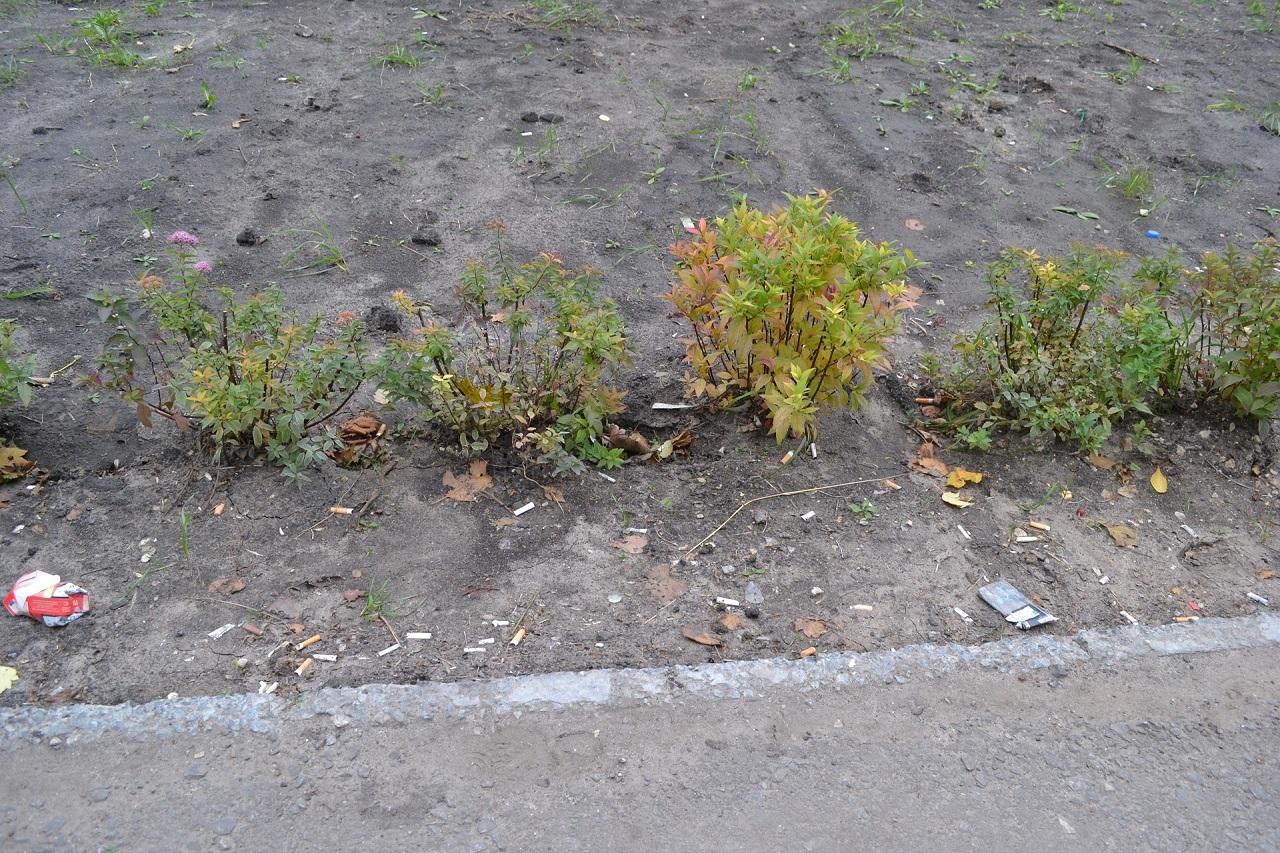 Высаженные растения, следует обрезать на высоту 30-40 см, даже, если высота растений, которые высаживаются, значительно больше.