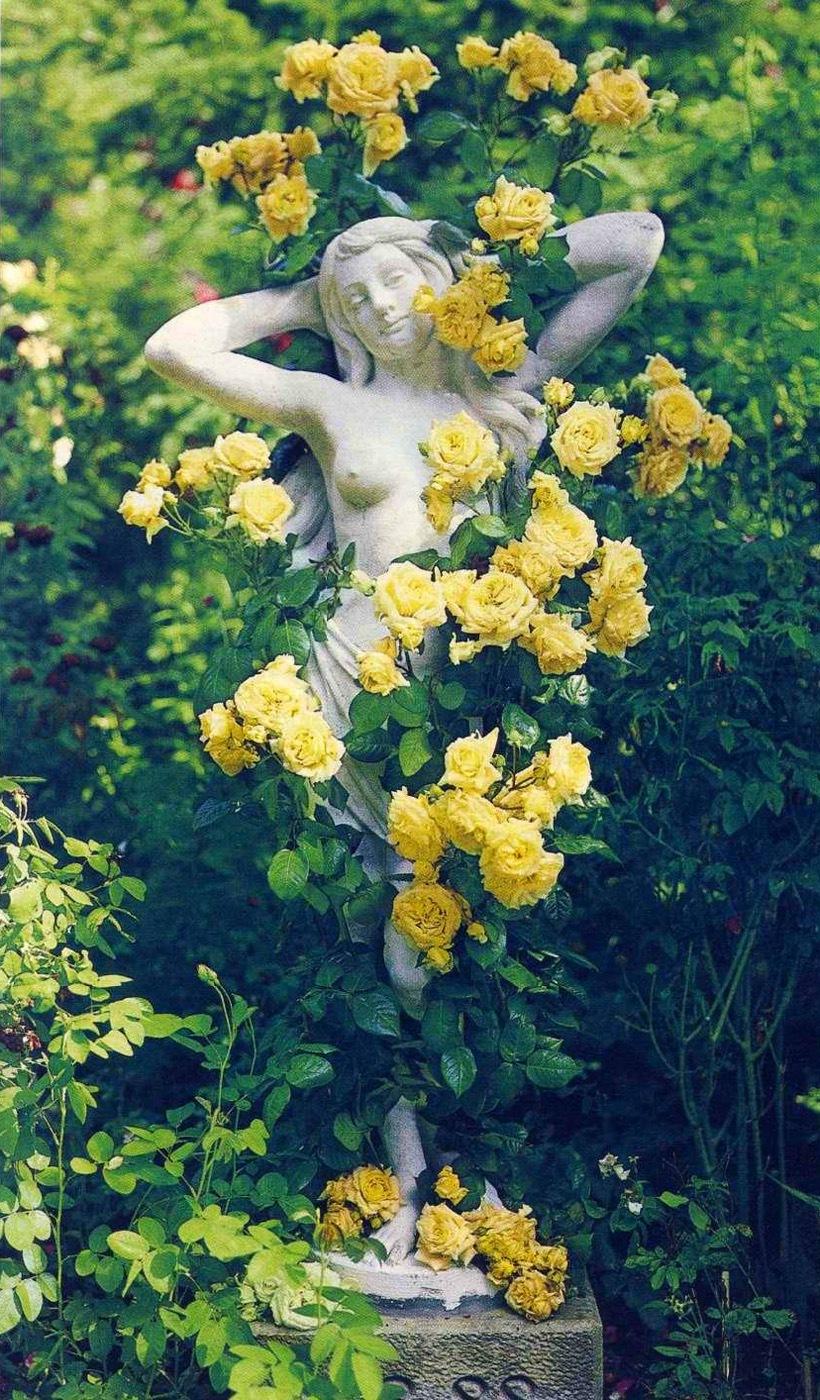 В саду классического стиля, в качестве опоры для плетистой розы часто используют садовые скульптуры и статуи, кованые элементы.