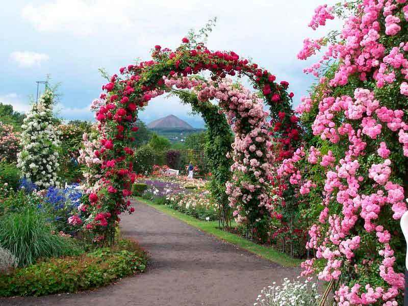 Арка – это многофункциональная конструкция в садовом дизайне, служащая проходом из одной зоны сада в другую.Несколько ,расположенных в ряд арок, образуют цветущую роскошную аркаду.