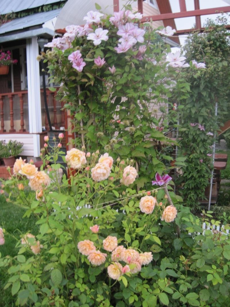 В оформлении романтического сада лучше использовать вьющиеся розы кремово-розовой, светло-желтой или бледно-розовой окраски.Такая цветовая гамма расслабит и подарит умиротворение.