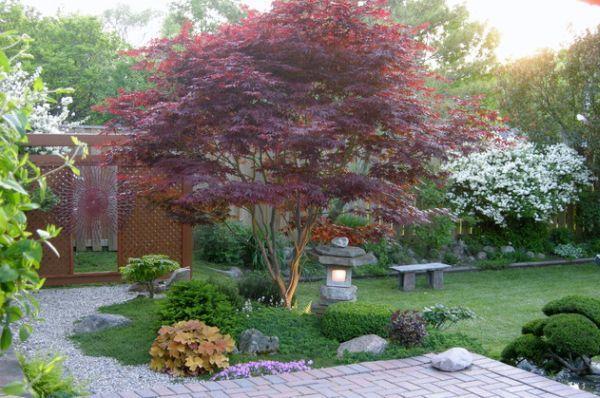 Растения с красной листвой - украшение японского сада