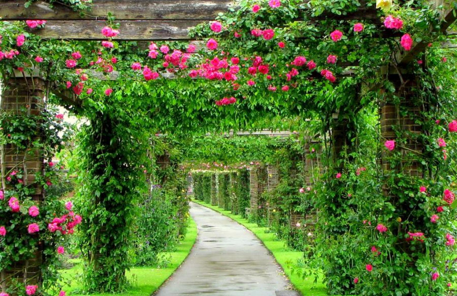 Арки или перголы, увитые плетистыми розами, беседки, окруженные ими, придают саду новое дыхание и особую романтичность.