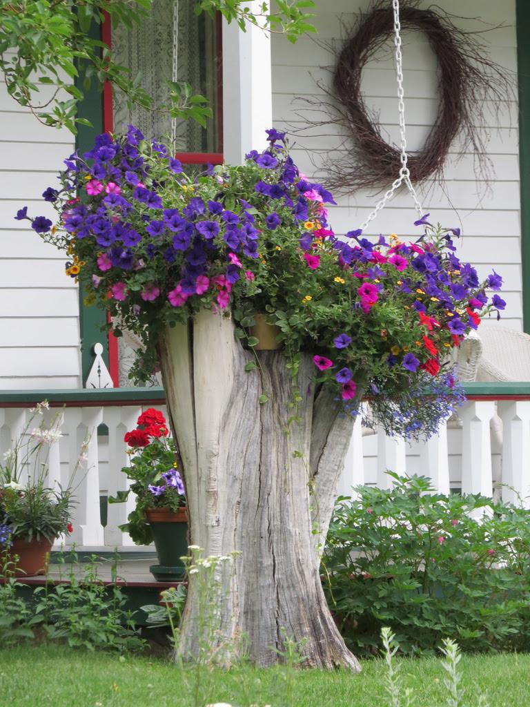 Старое дерево - подставка для вазонов