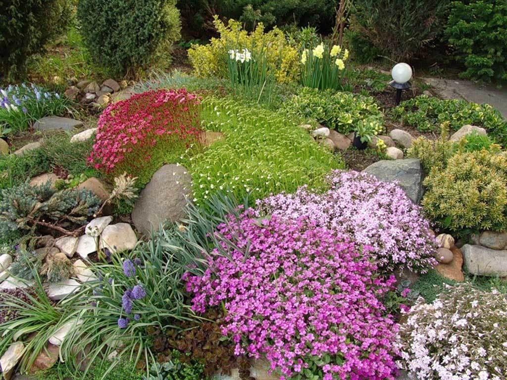 Разные виды растений обычно сажают довольно большими группами, получая красочные пятна необходимых размеров и очертаний, чтобы избежать пестроты и хаоса на альпийской горке.