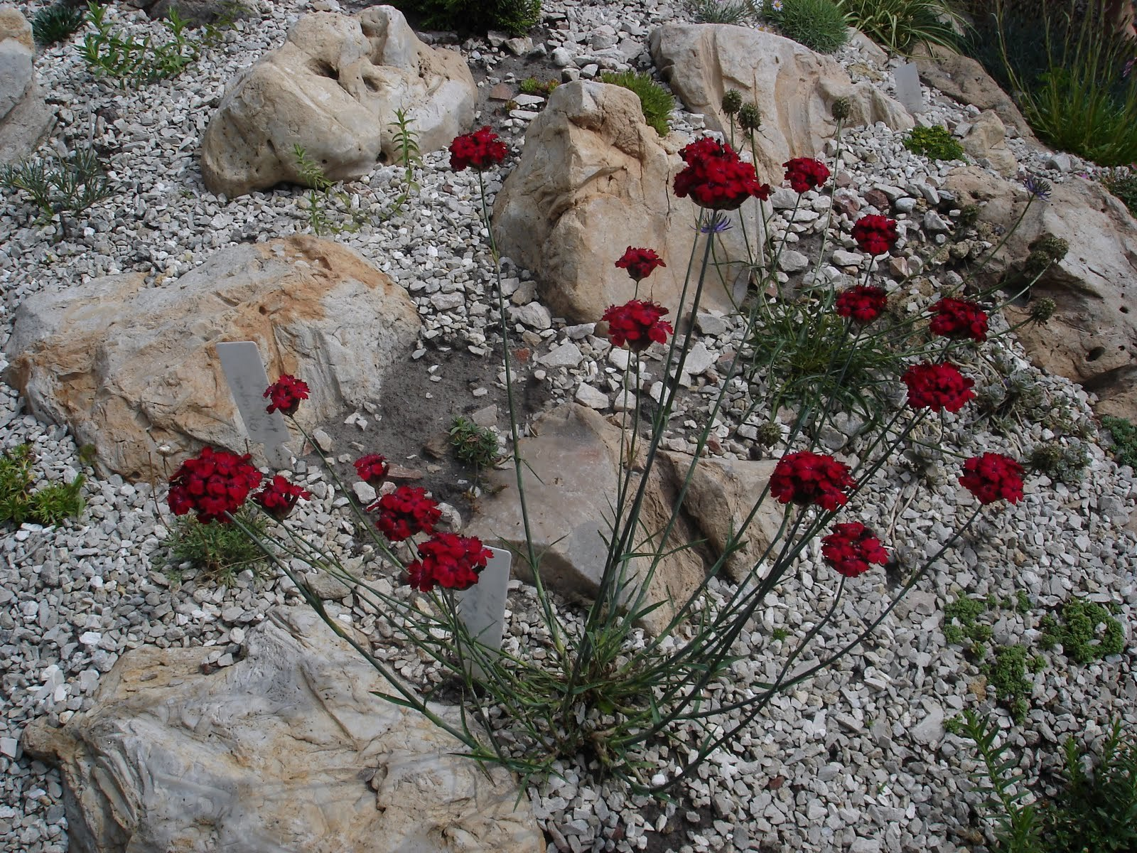 Устанавливаем камни на созданные опоры и укрепляем подсыпкой и уплотнением земли. Камни должны быть заглублены в грунт не менее, чем на 1/3 и не более, чем на 2/3.