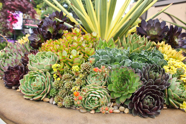 Ярко окрашенные растения для солнечных клумб
