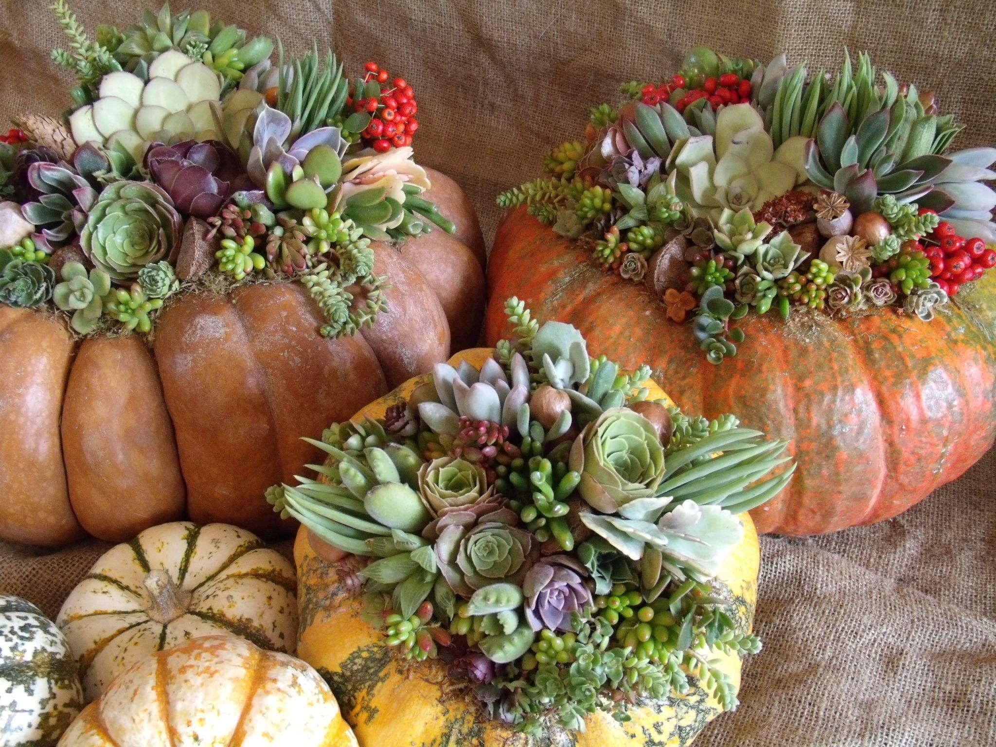Садовый декор из тыквы и суккулентов