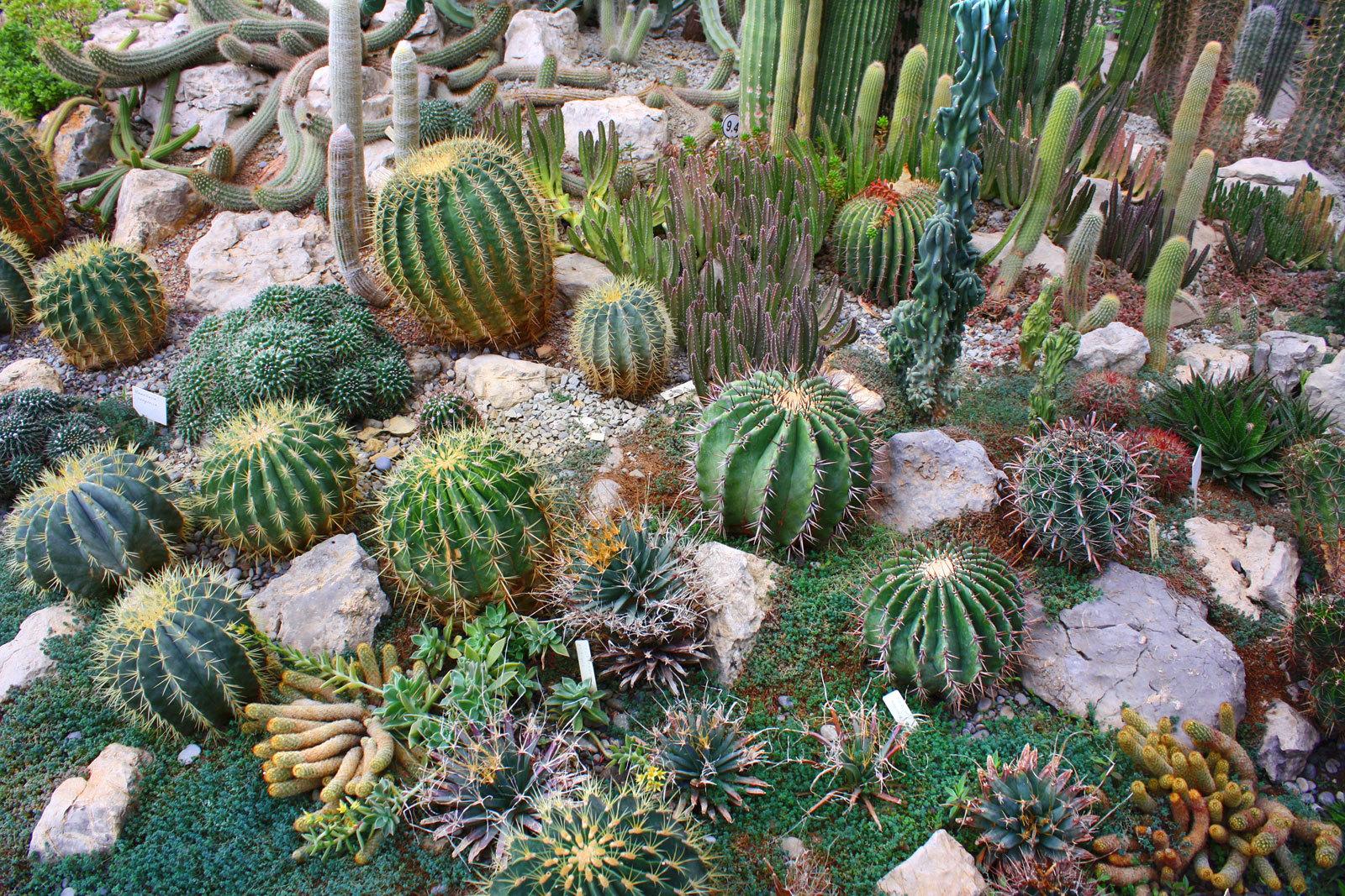 Рокарий с кактусами