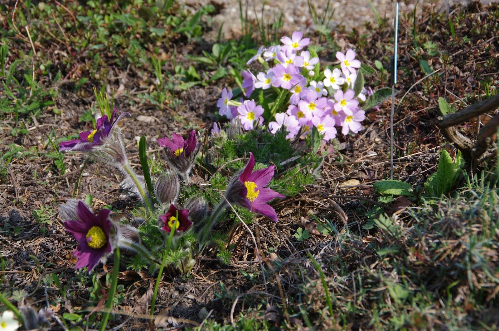 Универсальные растения. Многочисленная группа,в которую входят растения прекрасно чувствующие себя как на солнечных сухих участках,так и в полутени.