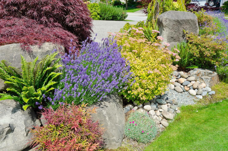 Так как для высокогорной флоры не характерны растения с крупными эффектными цветками, добавить красок в ландшафт можно с помощью вечнозеленых и пестролистных форм растений.