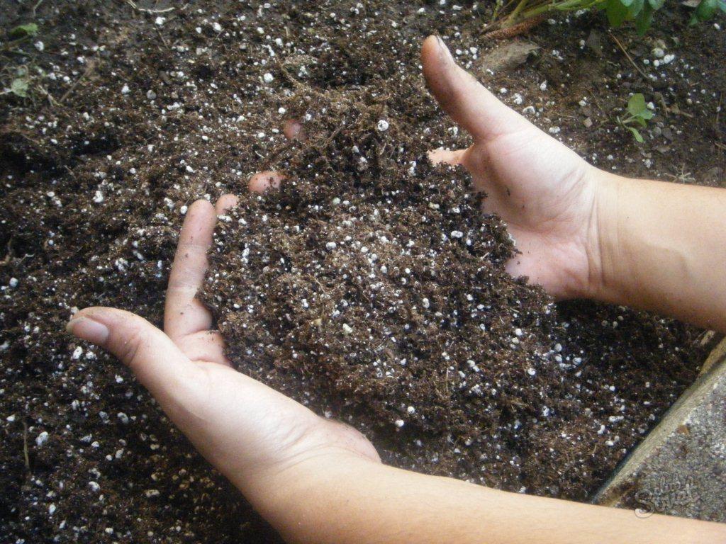 Выращиваем грибы на даче