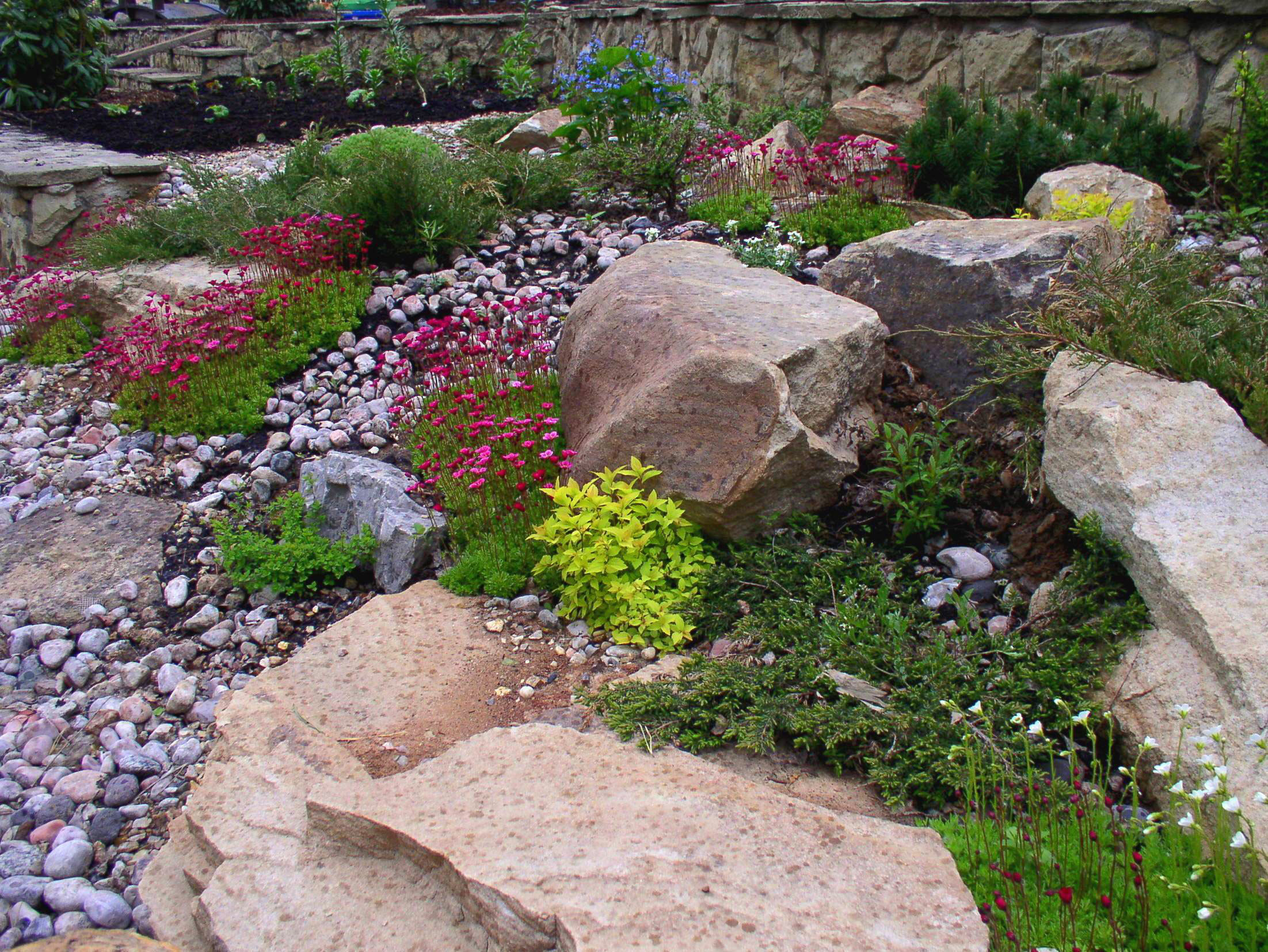 При укладке плит или камней между ними обязательно оставляют достаточное пространство для размещения растений и роста их корневой системы.