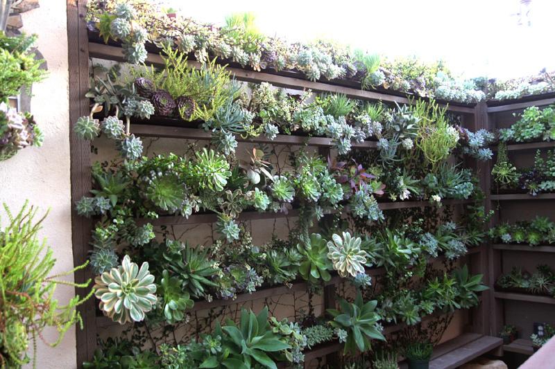 Живая стена из суккулентов. Вертикальное озеленение
