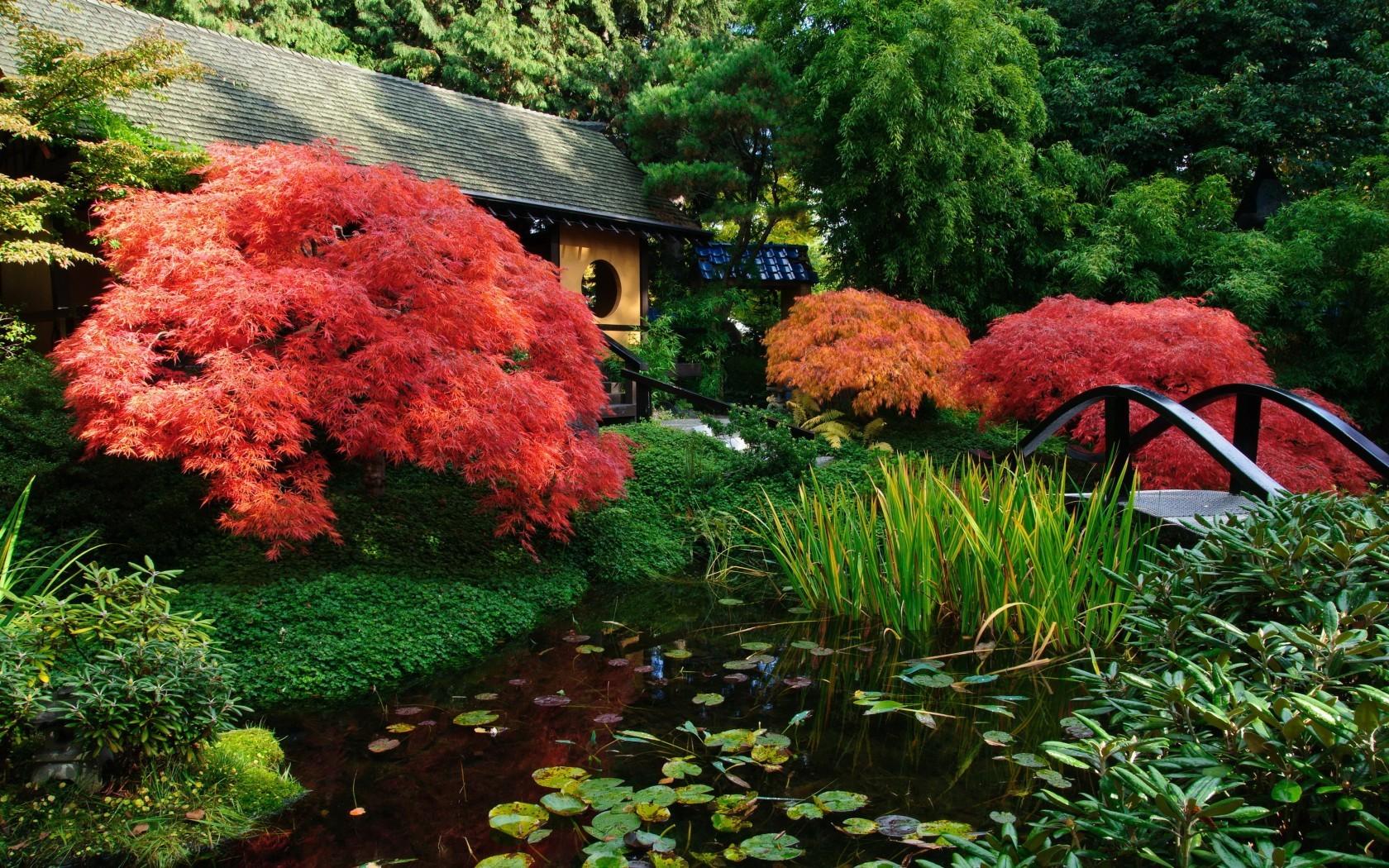 Растения берега должны иметь красивое цветение, фактурные листья разных тонов (вахта трехлистная, ирис сибирский, лилейник малый).