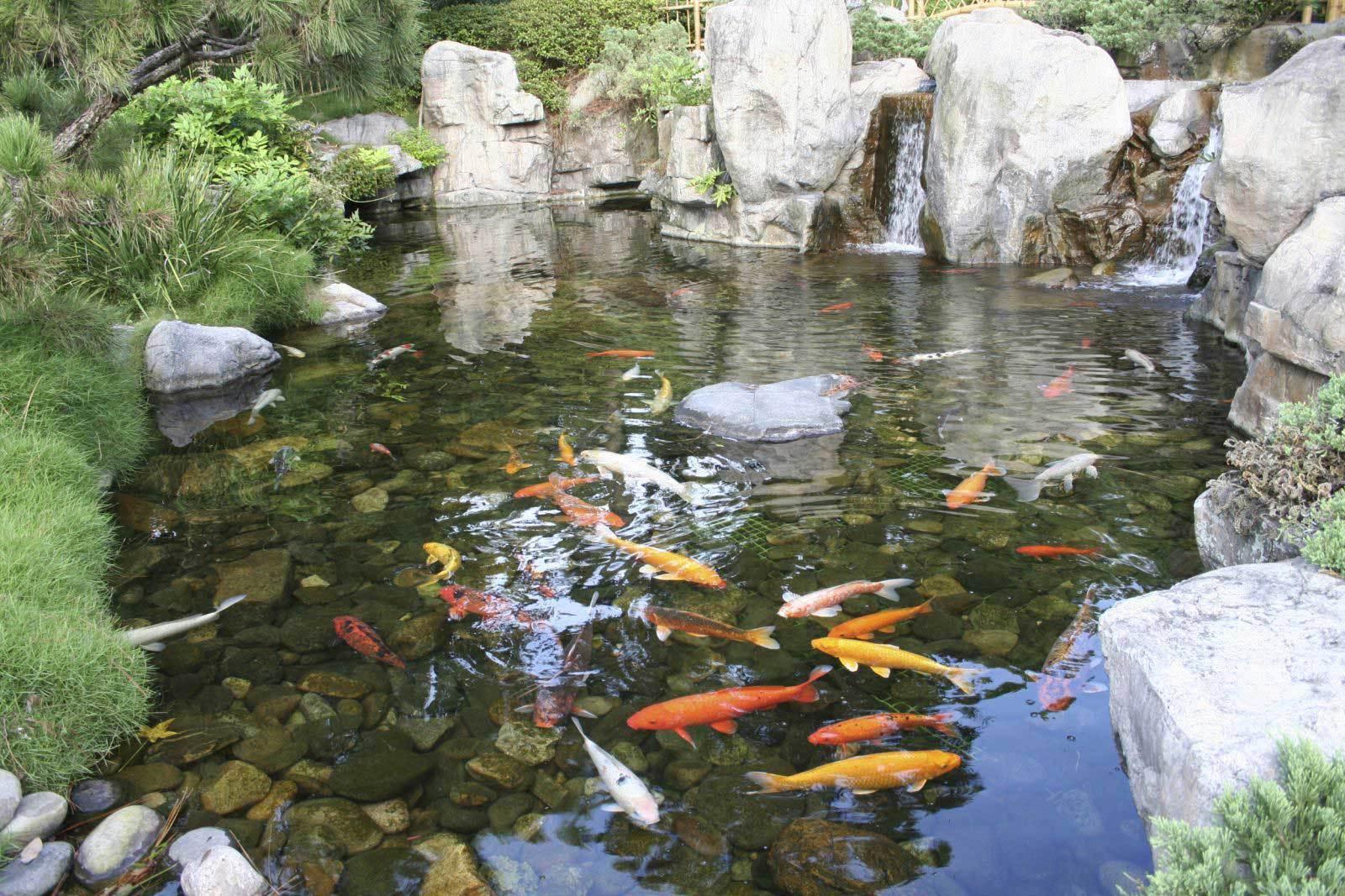 Пруд свободных очертаний занимает значительное пространство и предпочтителен для сада большого размера. Такой садовый водоем рассчитан на длительное функционирование и не требует особого ухода.