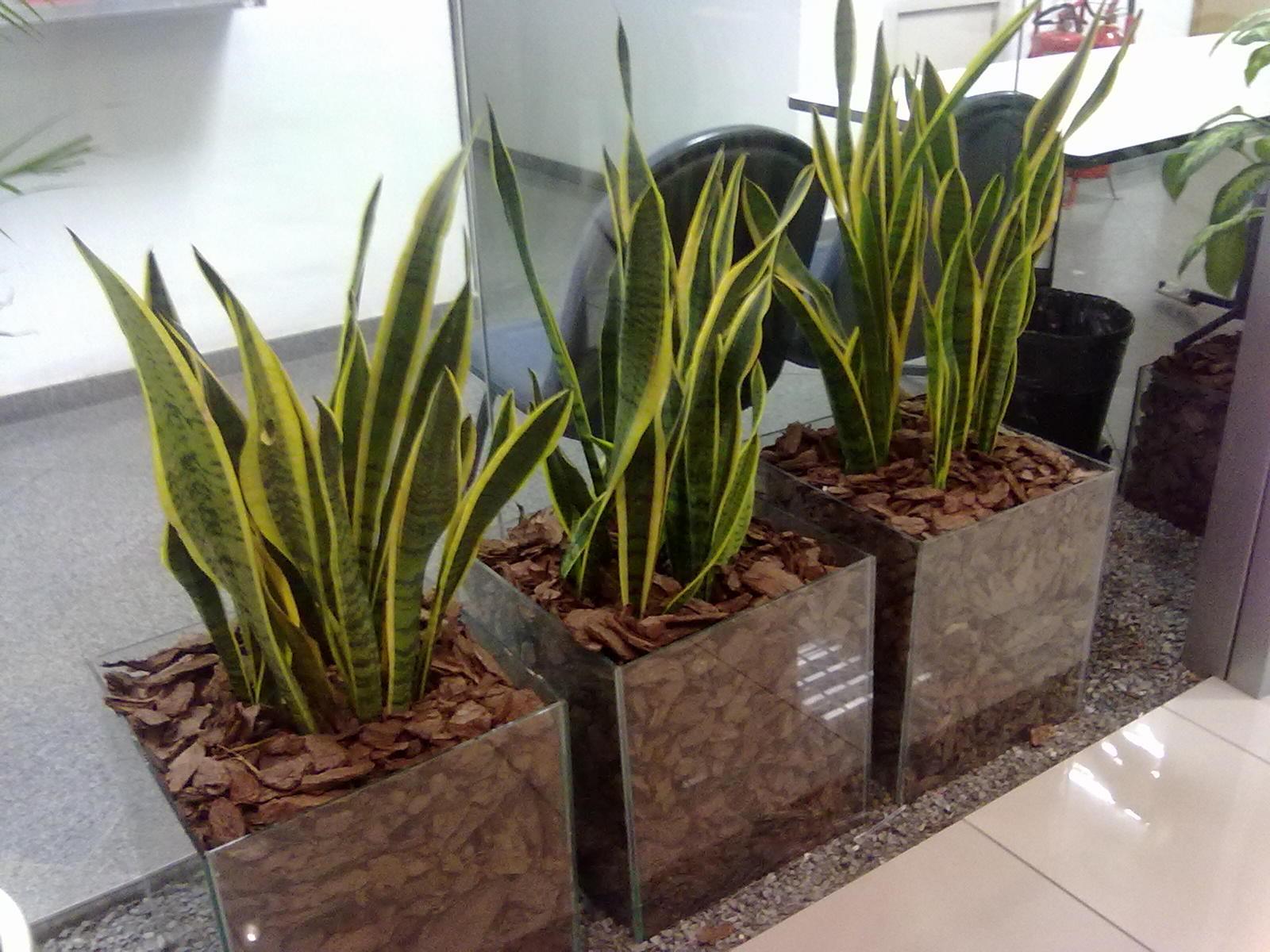 Стеклянные контейнеры для растений