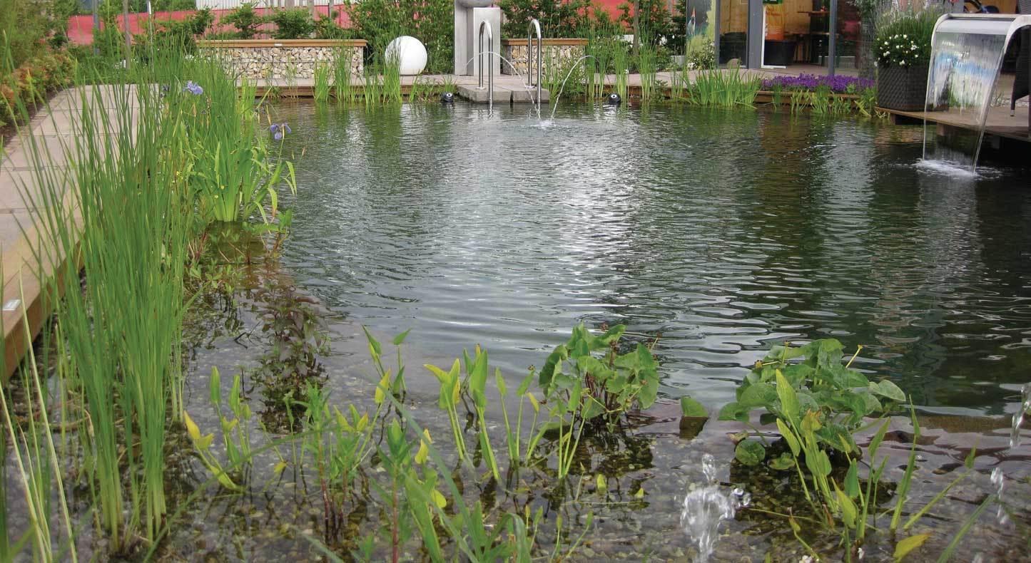 На самых глубоких уступах высаживают подводные и водные растения, которым не нужна почва - они будут поглощать все необходимые им питательные вещества прямо из воды.