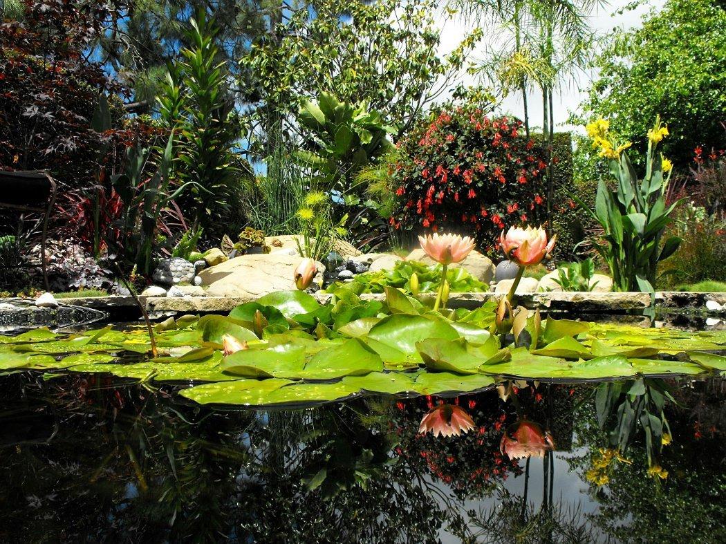 Высадив в прибрежной зоне растения с буйной свежей зеленью, вы преобразите любой скучный пейзаж.Микроклимат болотца позволит выращивать виды растений, которые нуждаются во влаге и влажном воздухе.