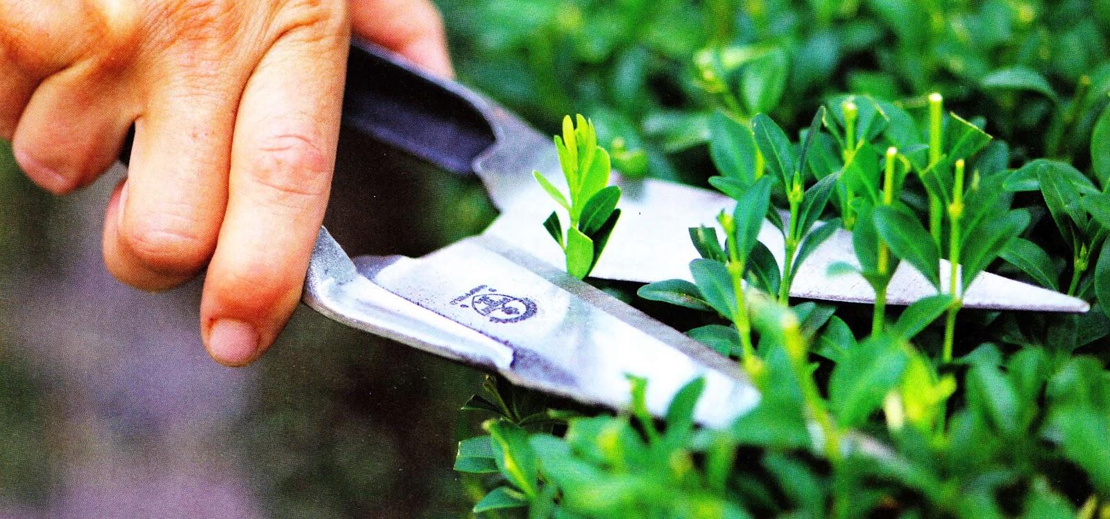 Садовые ножницы для живой изгороди, бордюрные