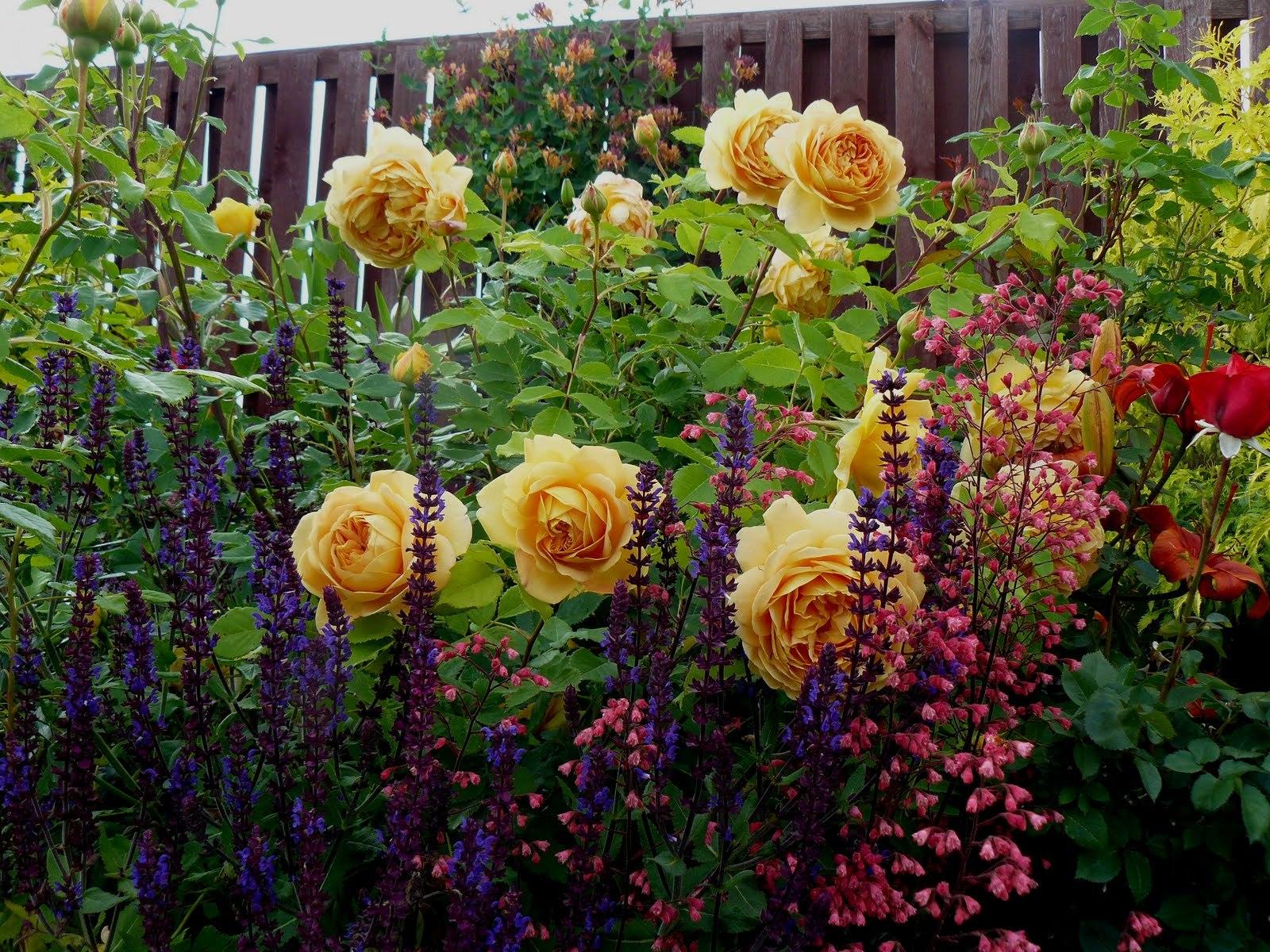 При соблюдении некоторых условий, смешанные посадки очень эффектны, и выглядят неординарно и не так строго, как консервативные классические. Такие цветники называются пейзажными(естественными).