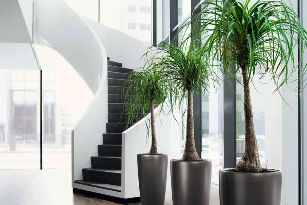 Озеленение офиса. Искусственные растения
