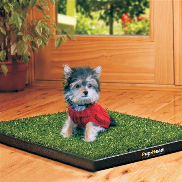 Если вы недавно приобрели щенка, туалет поможет сохранить чистоту в доме и приучит вашего питомца к порядку.