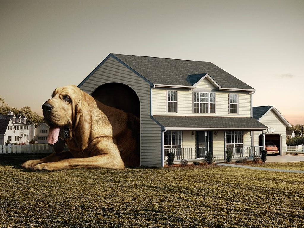 Предлагаем вам подготовить дом для комфортного и безопасного проживания вас и собаки.