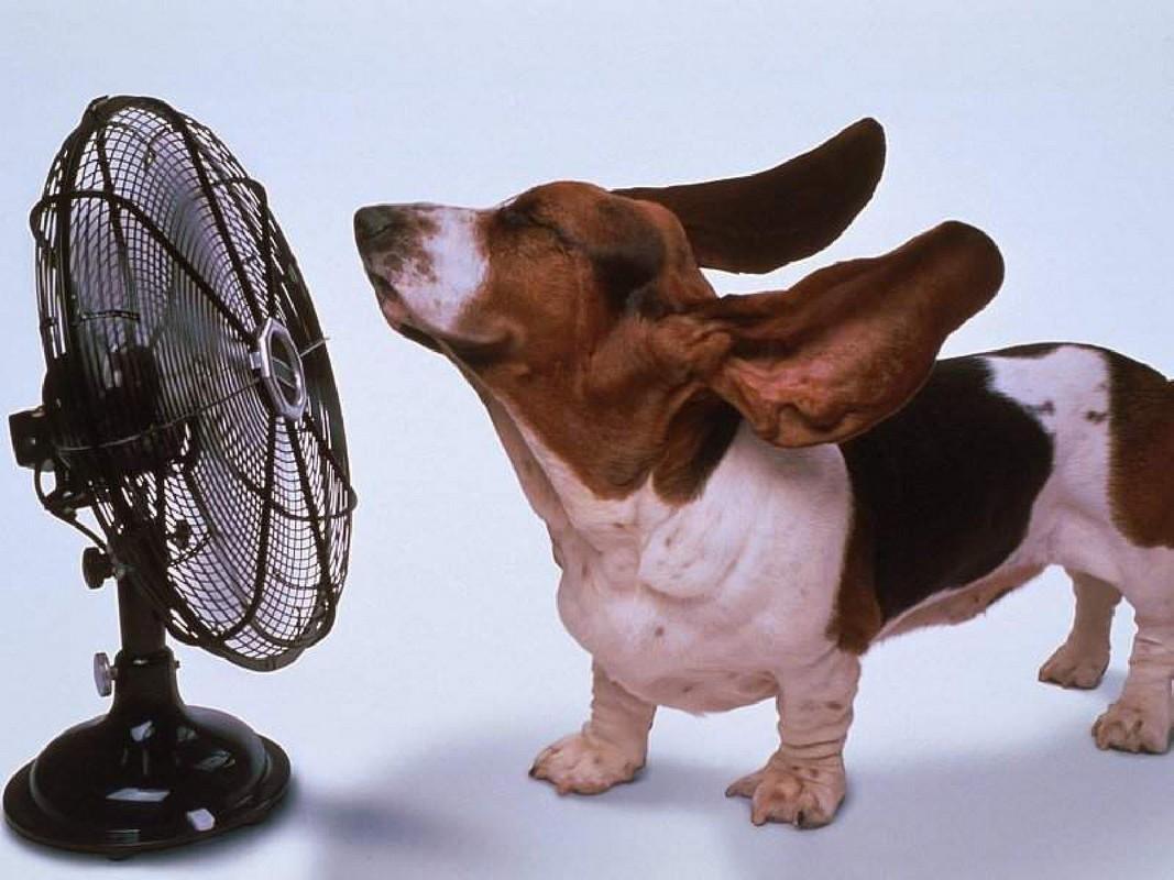 Работающие приборы, должны быть вне зоны досягаемости любопытного щенка.