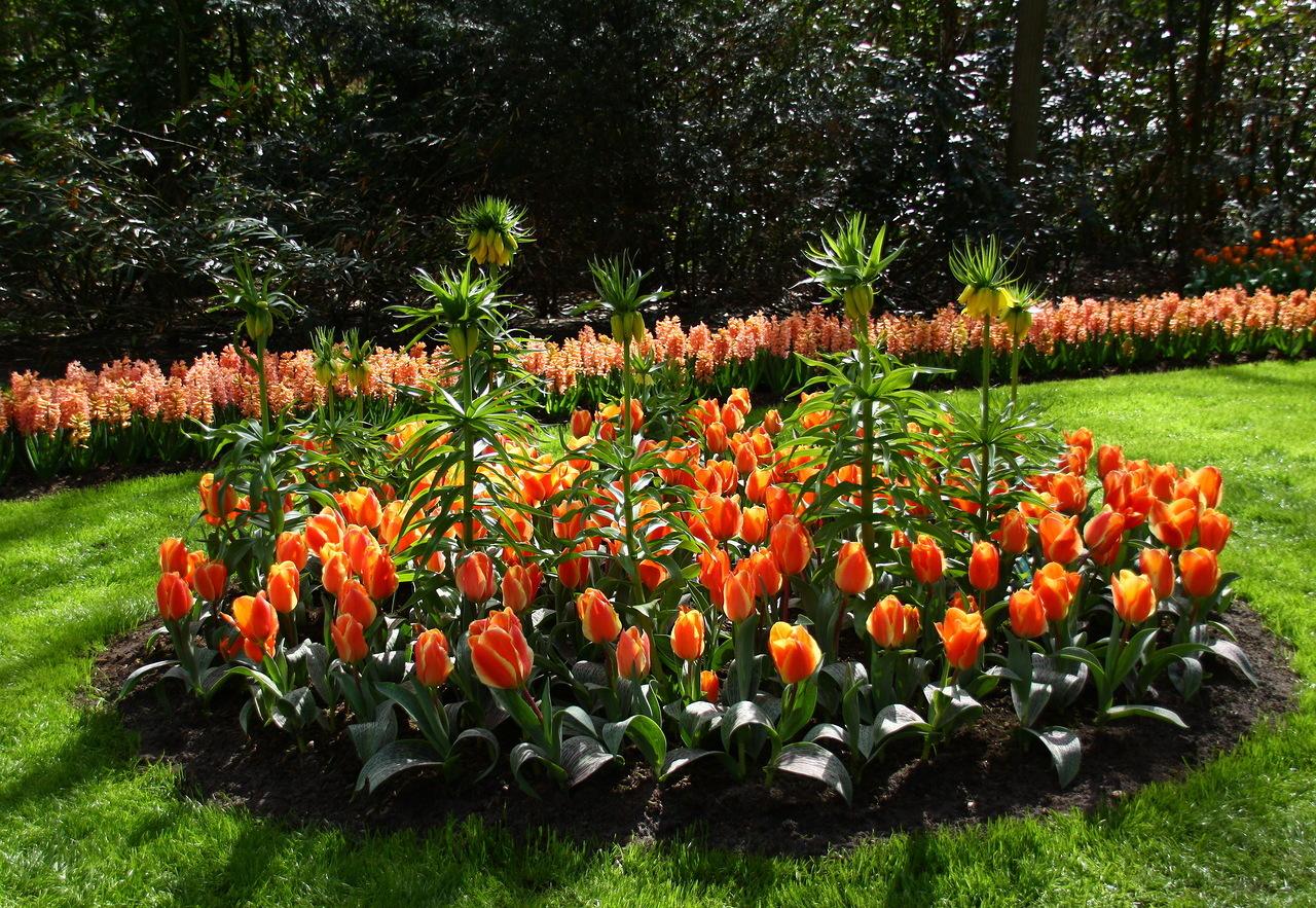 На клумбе высаживайте не только гиацинты, а и другие весенние цветы с разными сроками цветения.
