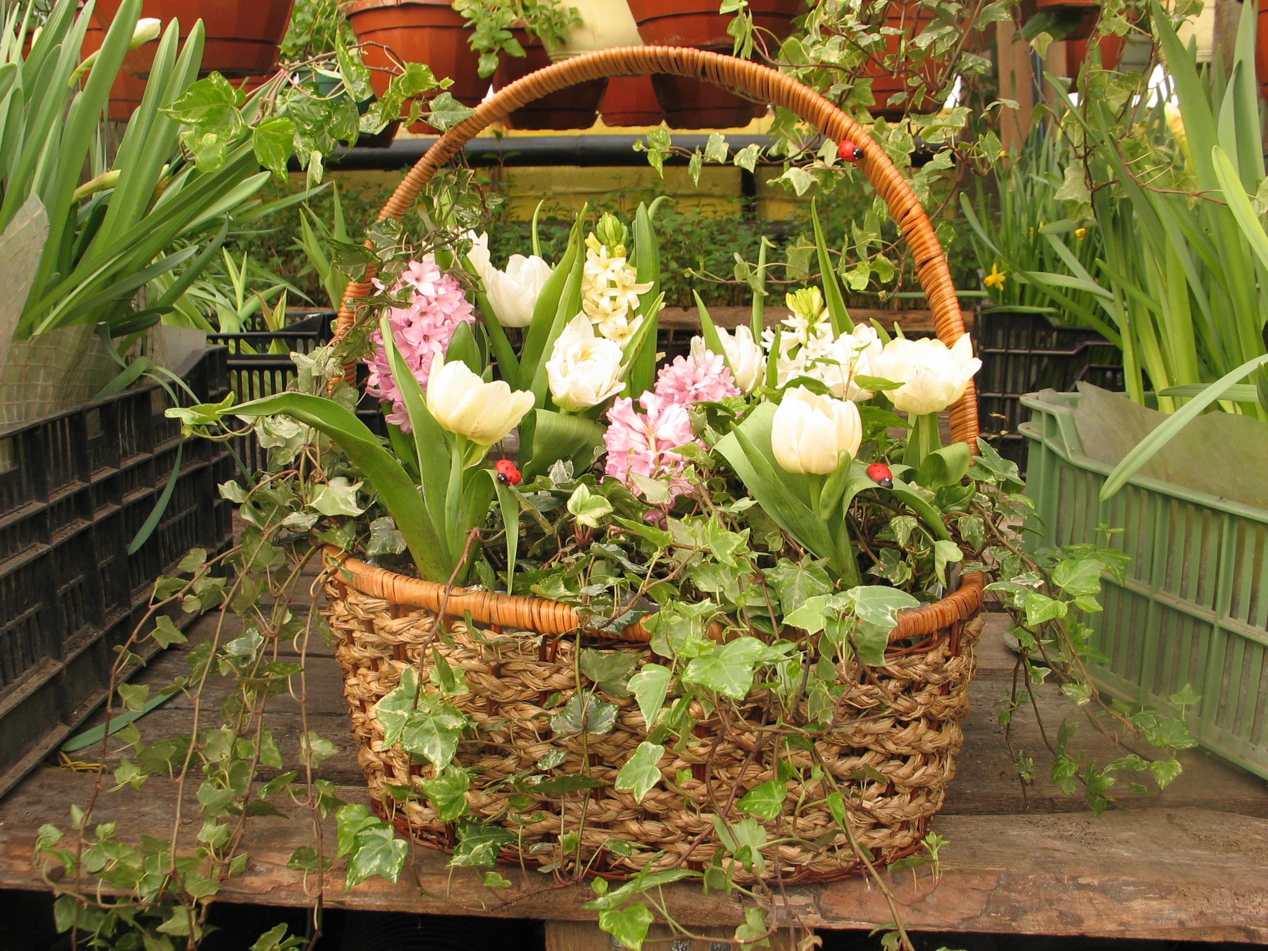Наполните плетеную корзинку цветами в горшках: белыми тюльпанами, розовыми гиацинтами.