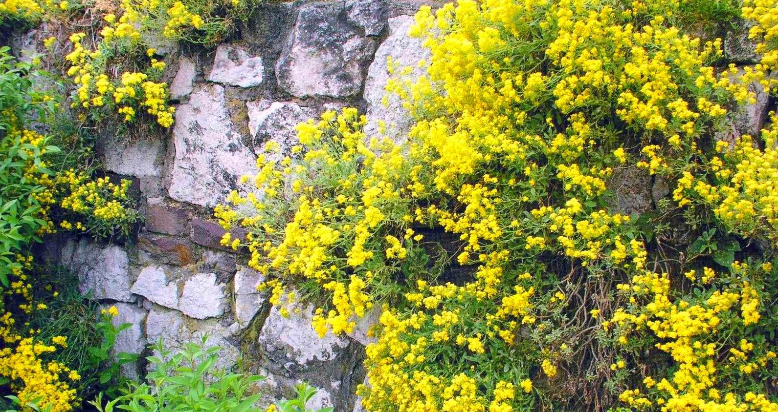 Посадите больше растений у основания подпорной стенки или в оставленных среди камней нишах.
