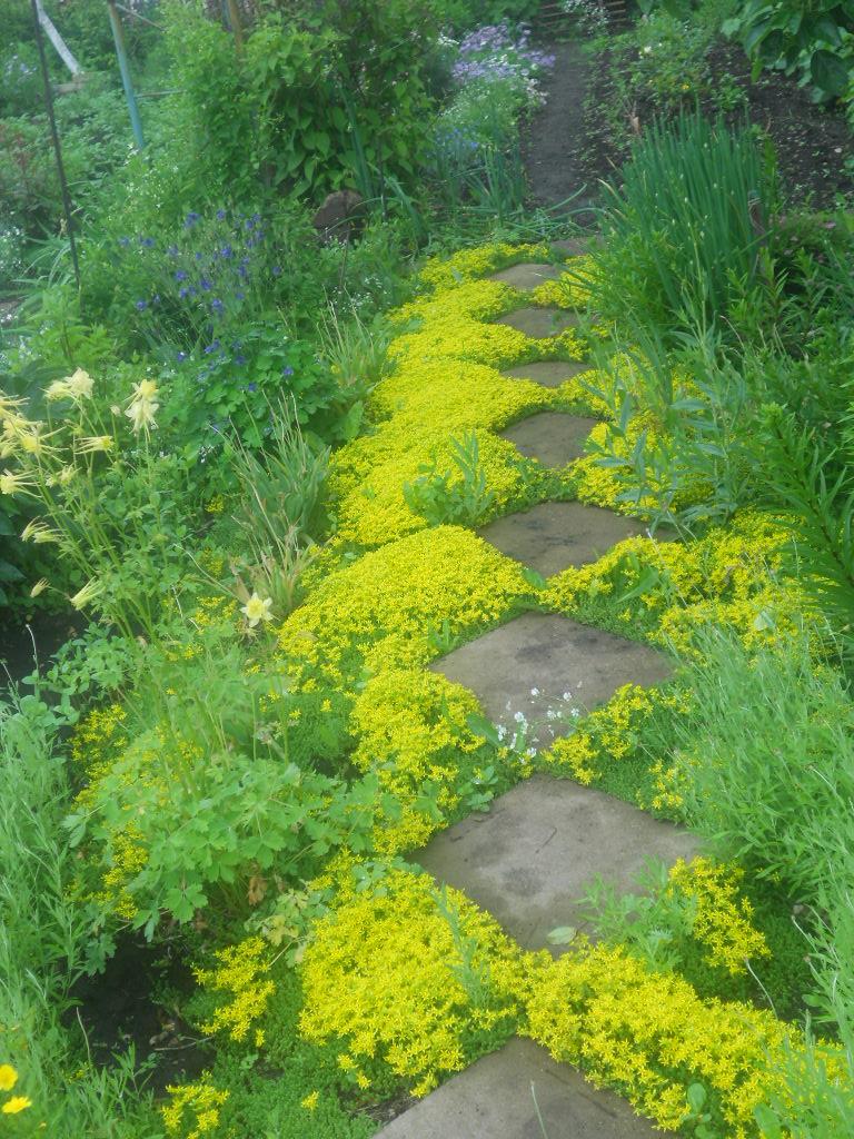 Отлично подойдут почвопокровные растения: седум едкий, седум испанский, вербейник монетчатый.