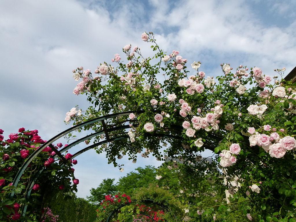 Арка, увитая розами, объединяет разные части сада и при этом очерчивает зоны отдыха.