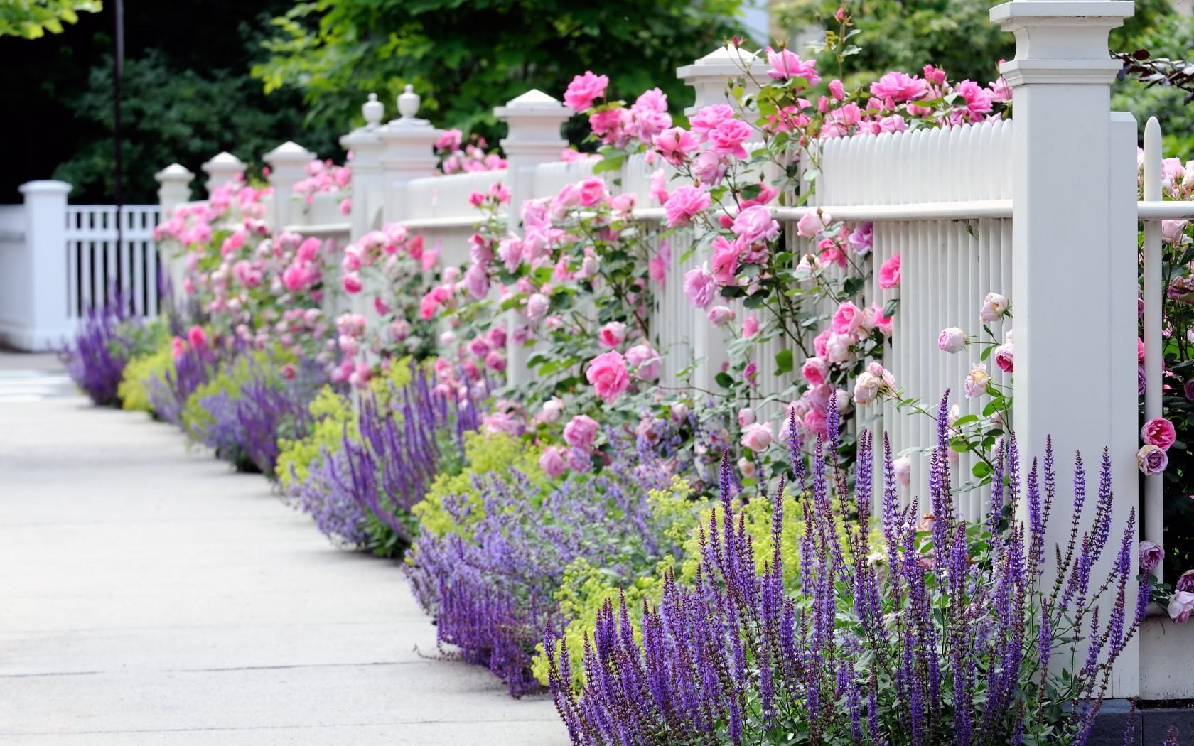 Розы-чарующие, изысканные и прекрасные.