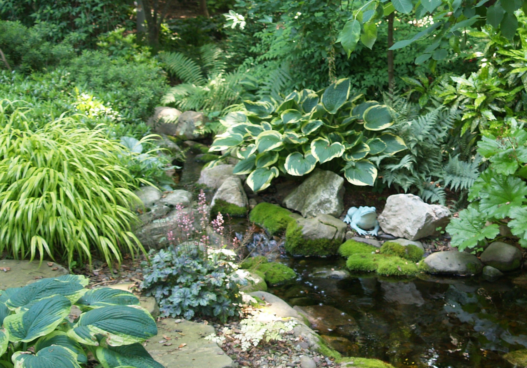 Пестролистные сорта хосты отлично сочетаются с сизыми и зелеными.