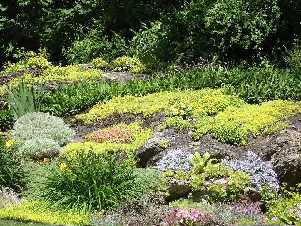 Светолюбивые и засухоустойчивые растения:адонис, молодило, декоративные луки, видовые тюльпаны.