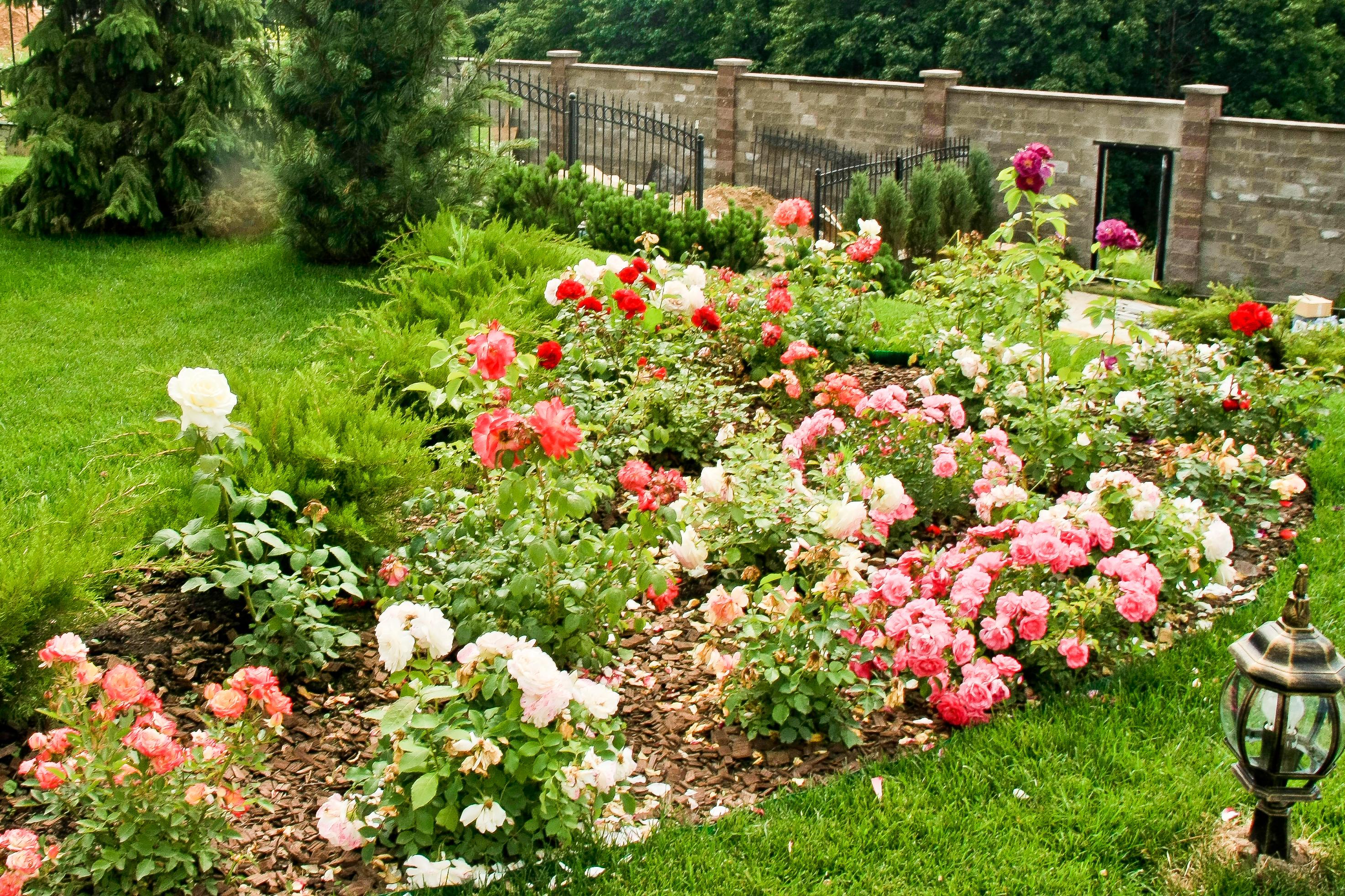 Установите на границе цветника ограничители, чтобы при поливе не повредить растения шлангом