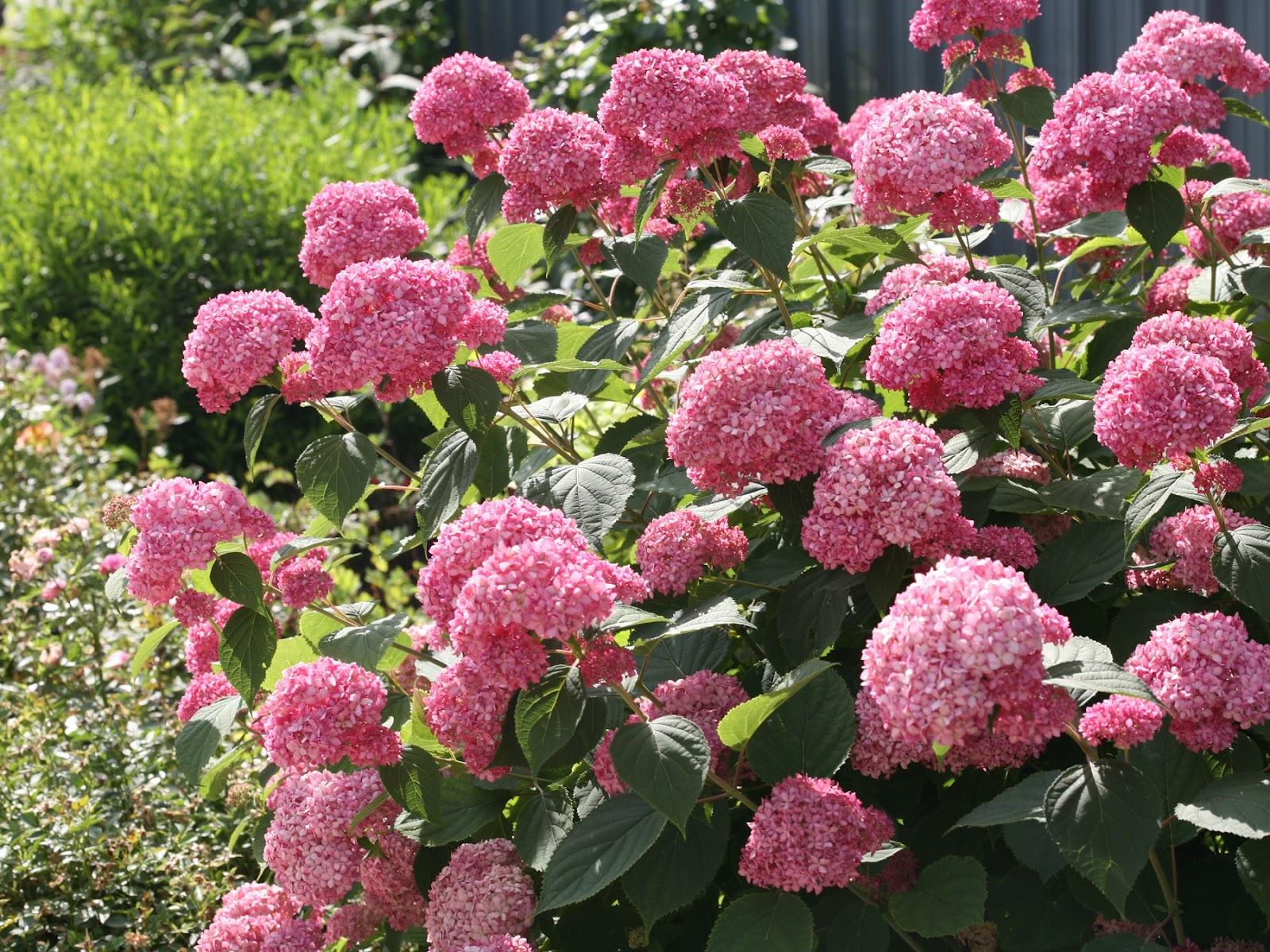 Купить цветы кустарники, сказочная любовь букет