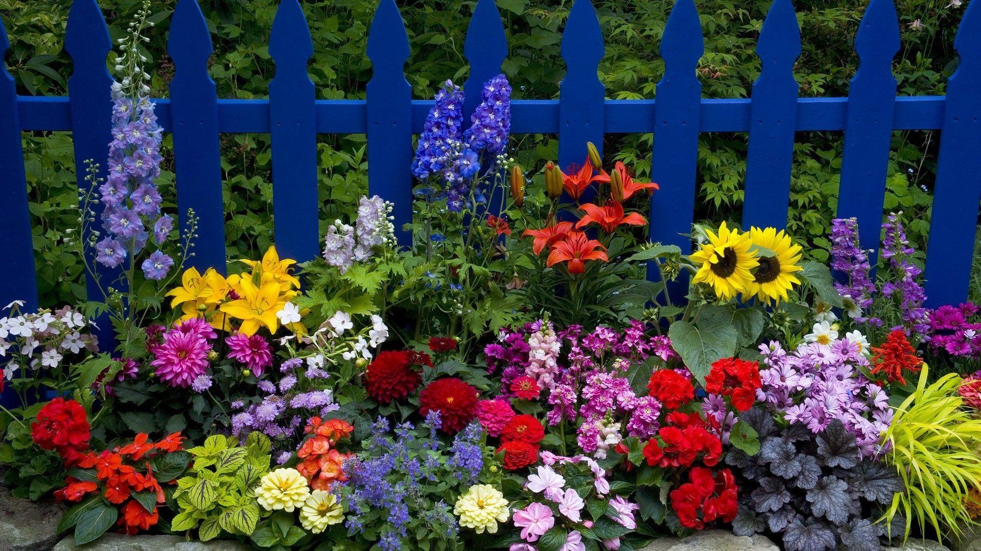 Правильный цветник-сочетание растений