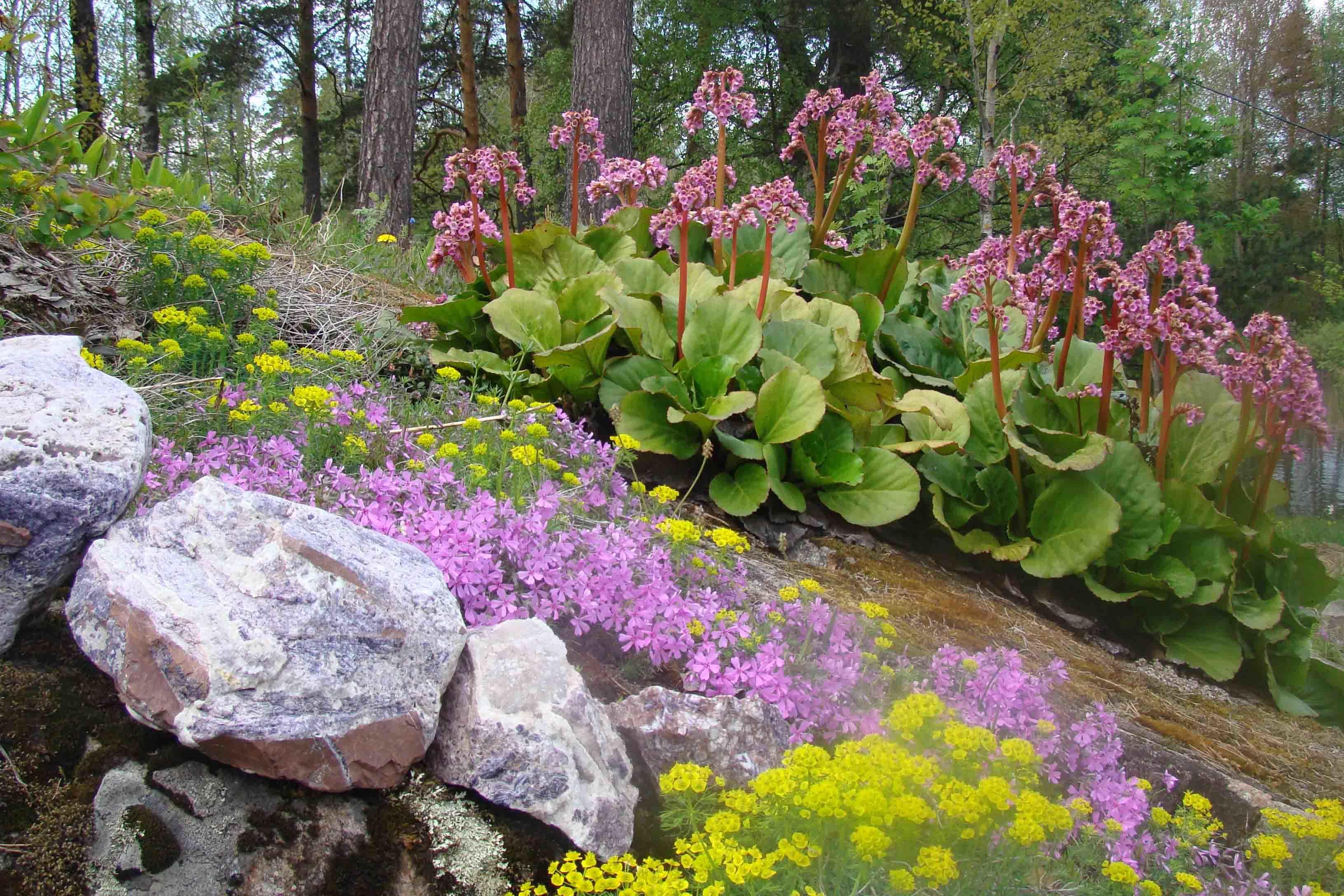 Планируйте свои посадки в саду, так чтобы у вас было несколько цветущих растений